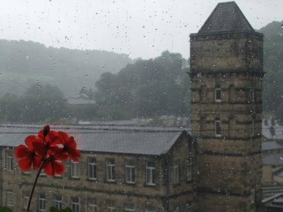 Flower, rain and mill, 5/9/11
