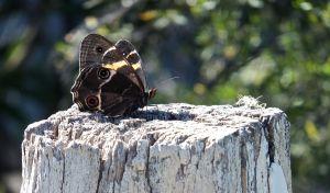 Butterfly, 12-3-13