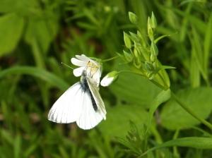 Butterfly , 6/5/14