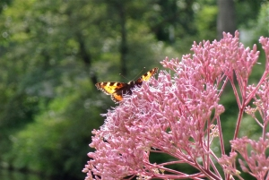Butterfly, Hamburg, 10/8/13