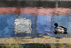 Canal reflections, 29/11/12