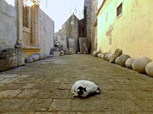 Cat at stonemasons, 19/10/14