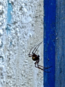 Cave spider, 5/10/13