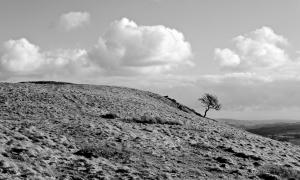 Lamb Pasture, 10/3/15