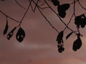 Late autumn leaves, 30/11/13