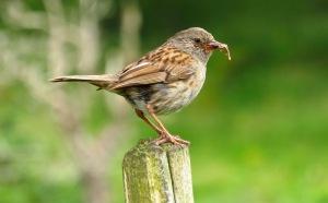 Mother bird, 25/7/17