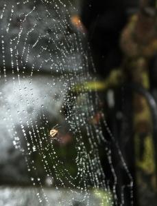 Wet web, 20/9/14