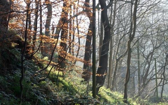 Midgehole woods, 19/11/11