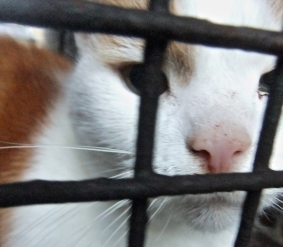 Cat behind gate, 11/1/12