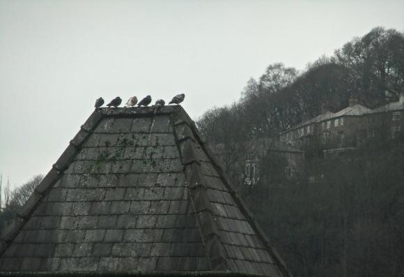 Pigeon meeting, 12/2/12