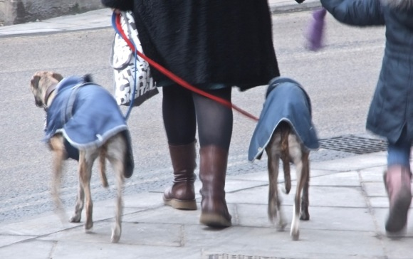 Wrapped whippets, 8/2/12_low-res