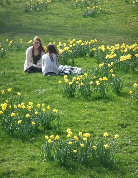 Daffodils on campus, 22/3/12