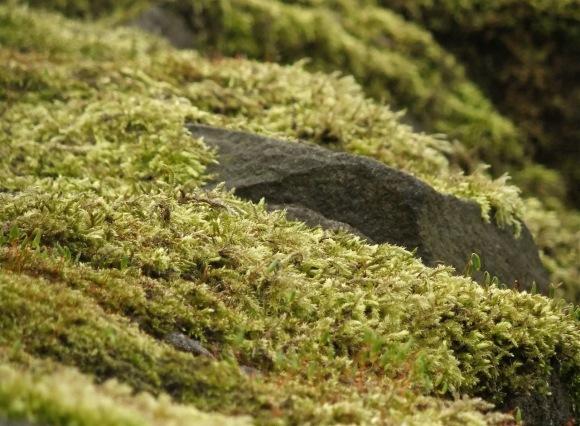 Moss carpet, 21/3/12