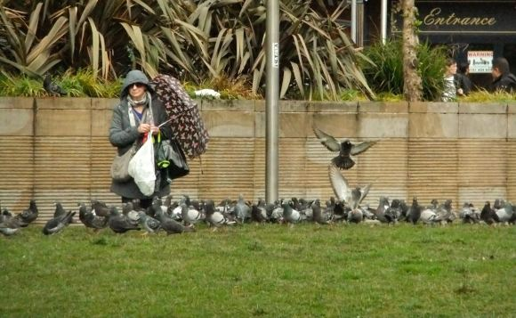 Pigeon feeding, 23/4/12