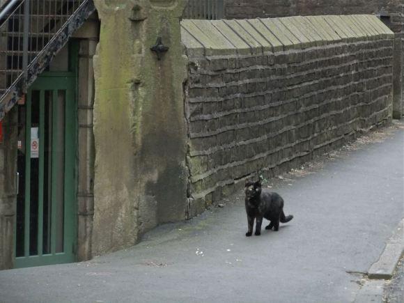 Black cat, 8/5/12