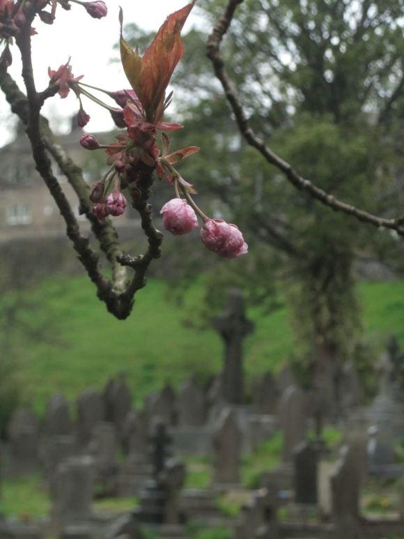 Cragg Vale churchyard, 7/5/12
