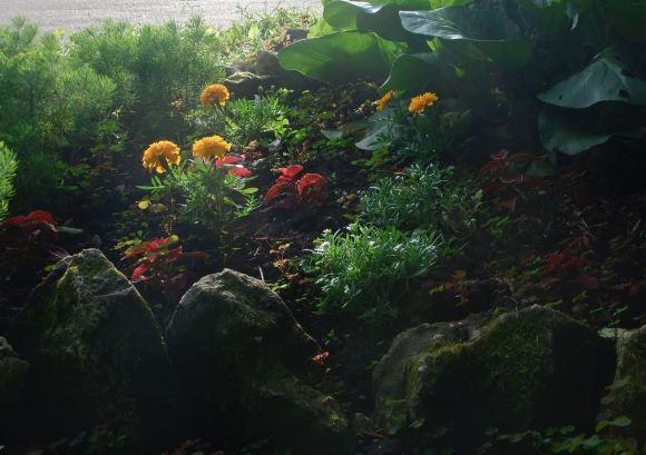 Atlas Park garden, 27/6/12