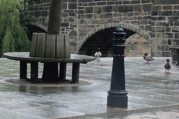 Wet ducks, 21/6/12