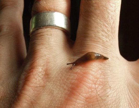 Baby slug, 23/7/12