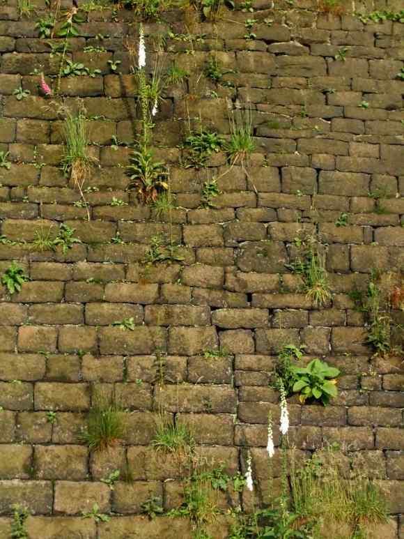 Foxglove wall, 5/7/12