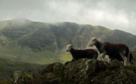 Sheep and Yewbarrow, 20/8/12