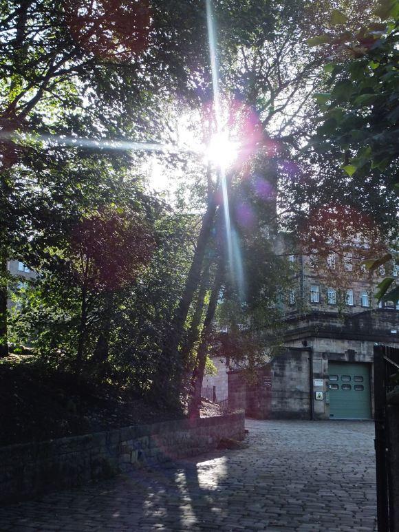 Calrec trees, 17/9/12