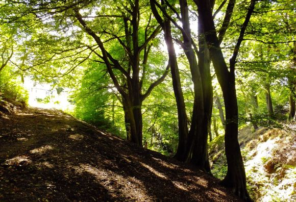 Nutclough woods, 8/9/12