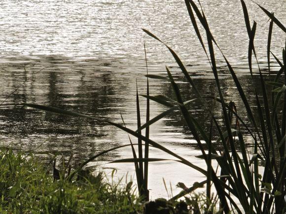 Reeds, 29/9/12