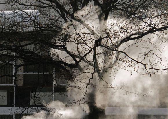 Steam tree, 12/12/12