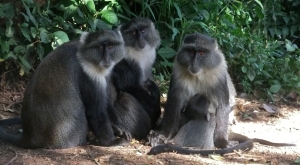 Monkey family, 12/1/13