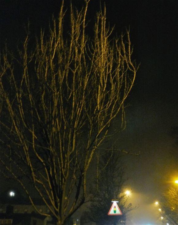 Winter tree, 9/1/13