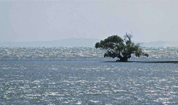 Mangrove, 5/4/13