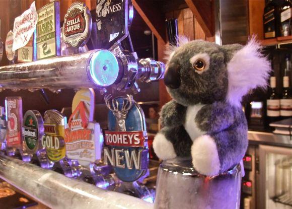 Koala toy, 5/5/13