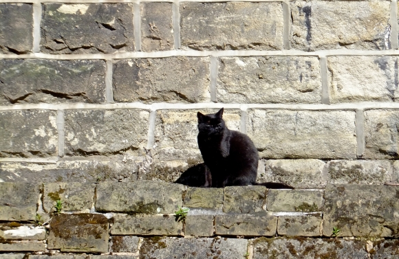 Cat and wall, 3/6/13