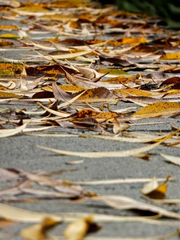 Fallen leaves, 26/10/13