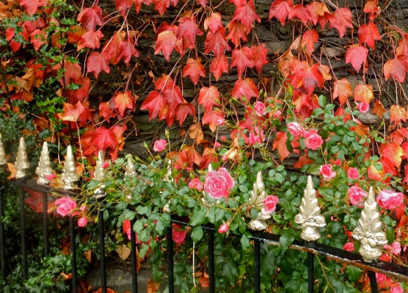 Roses and ivy, 30/10/13