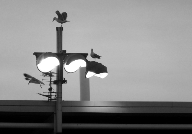 Seagulls, 29/12/13