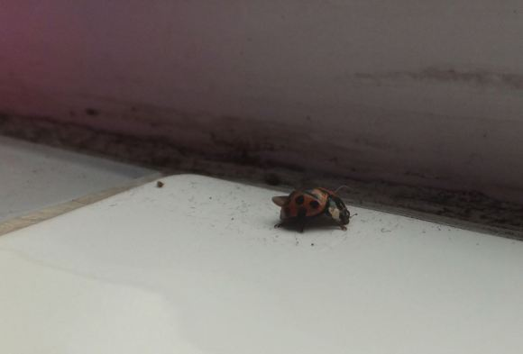 Ladybird, 13/2/14