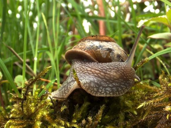 Snail, 8/5/14