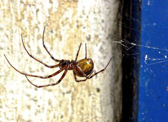 Cave spider, 22/6/14