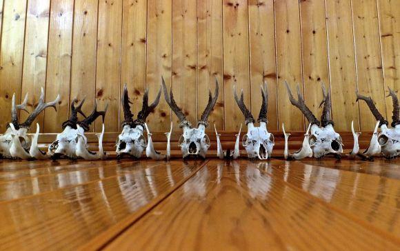 Deer skulls, 6/8/14