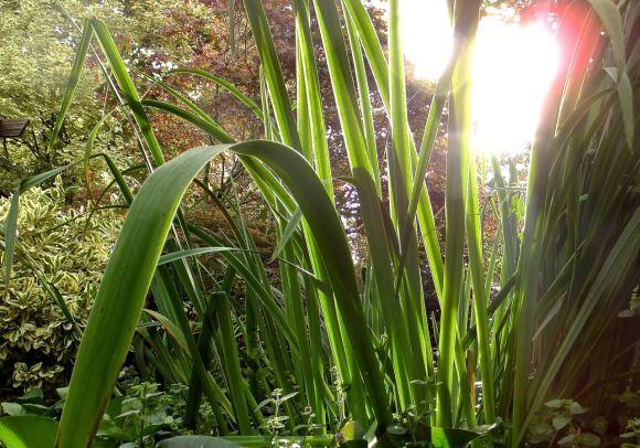 Undergrowth, 5/8/14