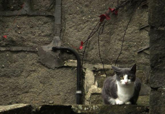 Cat, Old Gate, 20/9/14