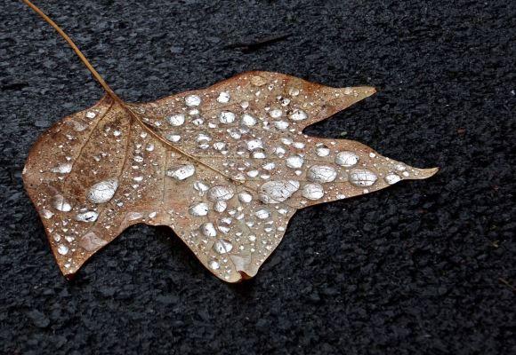 Fallen leaf, 24/10/14
