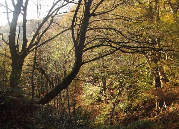 Autumn woods, 1/11/14