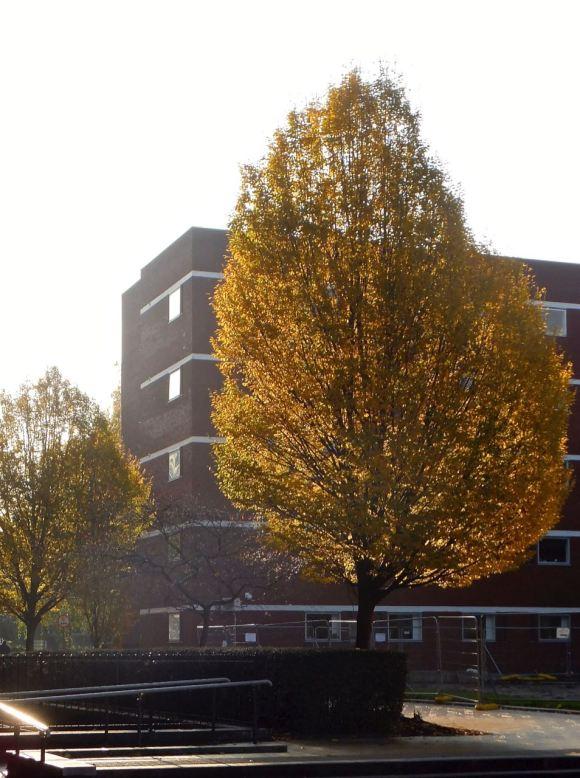 Campus tree, 18/11/14