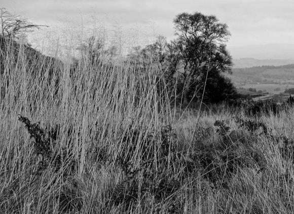Grass and bracken, 13/11/14