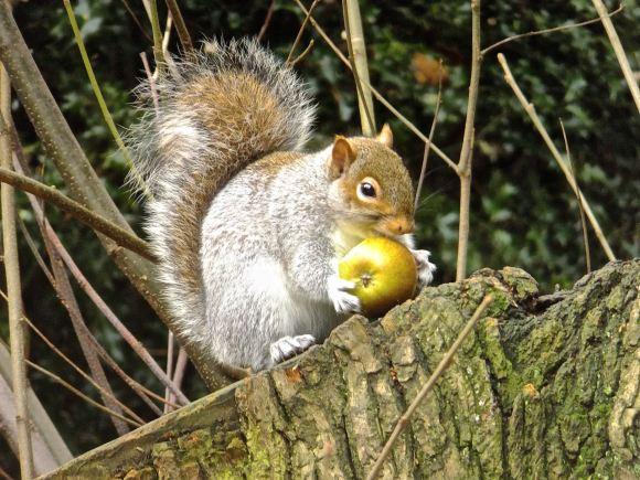 Squirrel foraging, 15/12/14
