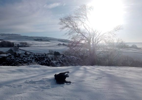 Maggie snow, 18/1/15