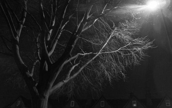 Caroline's tree, 13/2/15
